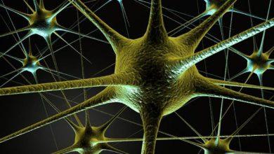تصویر از رشد سلولهای مغز در تمام عمر ادامه دارد
