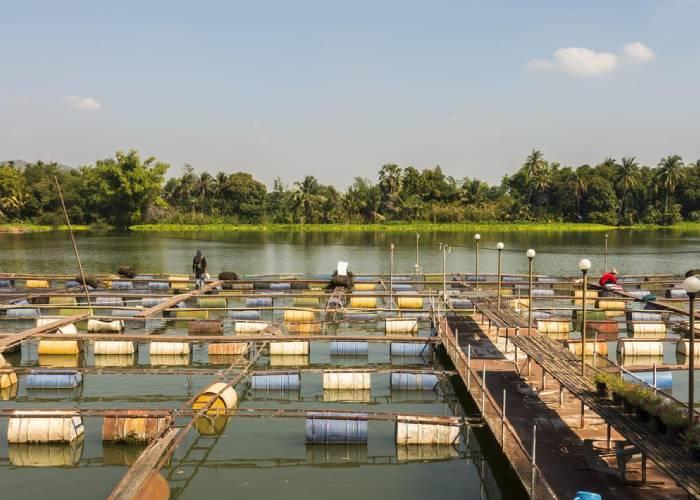 آلودگی دارویی رودخانه