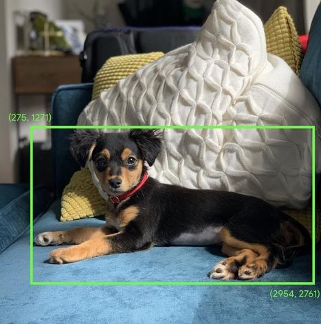 تربیت سگها با استفاده از هوش مصنوعی